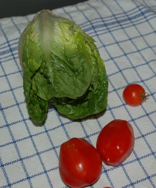 Romasalat mit Tomaten